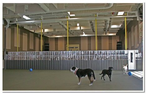 Dogs playing in front of Schweiss lift strap gate
