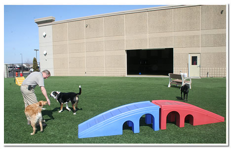 Irrigated outdoor play area at The Paw