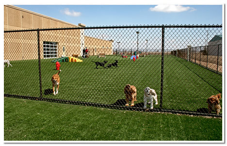 Large ourdoot astroturf play area at The Paw