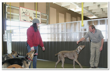 Tom Yenish training several dogs at The Paw pet resort